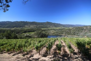 Viader-Winery-Napa-Valley (3)