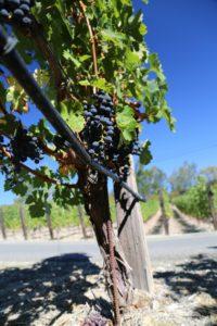 Vineyard-7&8 (3)