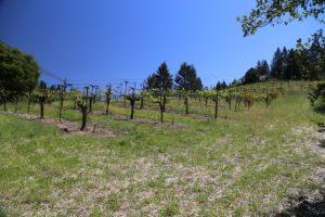 Wicker-Vineyard (2)