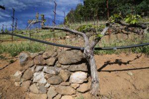 York-Creek-Vineyards (1)