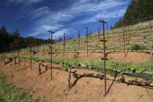 York-Creek-Vineyards (2)