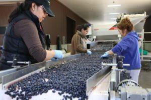 arkenstone-winery-napa (13)