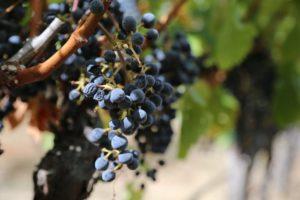 arns-winery (3)