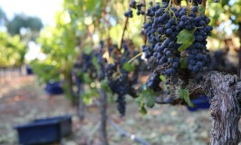 Sill Family Vineyard, Atlas Peak Merlot