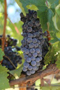grapes-aonair