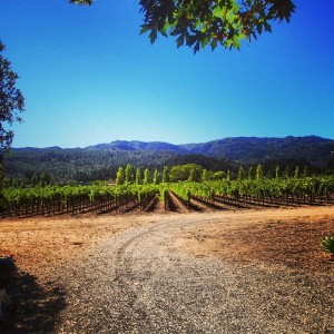 taplin-vineyard
