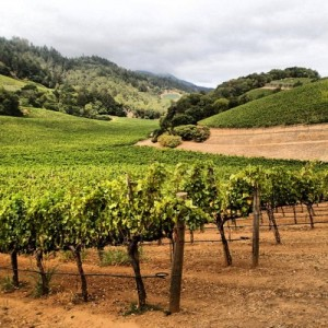 vineyard-house