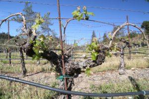 Juslyn-Vineyards