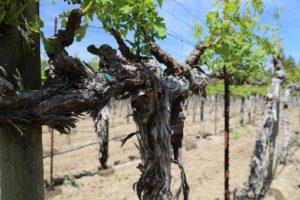 MTGA-Vines