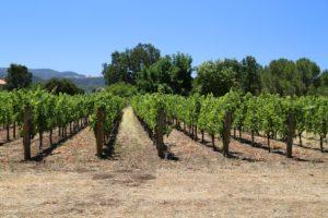 Next-Door-Vineyards (2)
