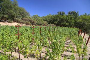 Perliss-Estate-Vineyard (2)