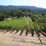 Perliss-Estate-Vineyard (3)