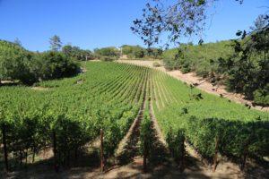 Perliss-Estate-Vineyard (5)