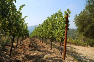 Knighton-Family-Vineyard (2)