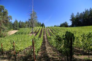 luscher-ballard-vineyard (6)