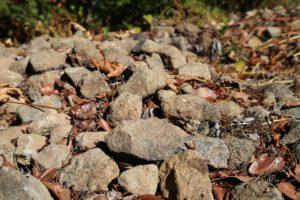 luscher-ballard-vineyard (7)