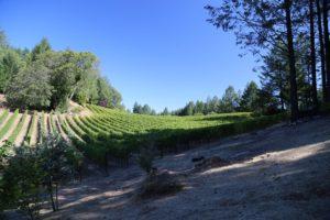 luscher-ballard-vineyard (9)