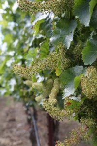 Kelly-Family-Vineyards (1)