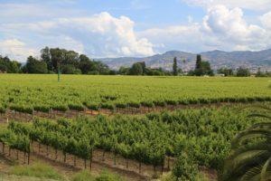Kelly-Family-Vineyards (2)