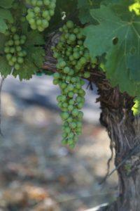 Alyris-Vineyards (19)