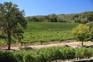 Arrow-Branch-Vineyards (5)