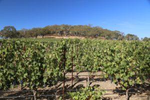Covert-Estate-Vineyard