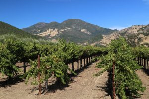 Spire-Collection-Napa-Valley (2)